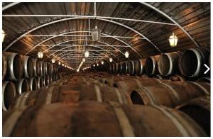 Caves des vins de Palmela et Setubal