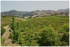 Vignoble des Vins de l'Algarve