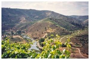 Paysage du Vale de Corça - Vins du Douro