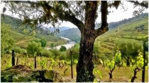 Vignes Vale de Corça - Vins du Douro