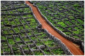 Vignes do Pico des Açores - Azor Concha